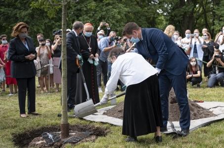 Drzewo pamięci w parku Powstańców Warszawy.